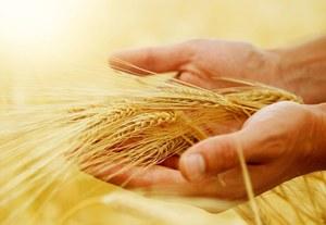 Globalne ocieplenie zagraża źródłom żywności na świecie