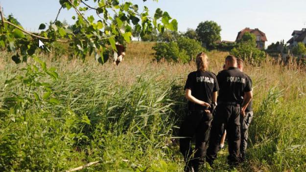 Gniezno: Tragiczny finał poszukiwań 16-latka z Wielkiej Brytanii