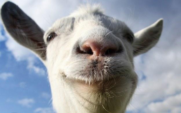 Goat Simulator /materiały prasowe