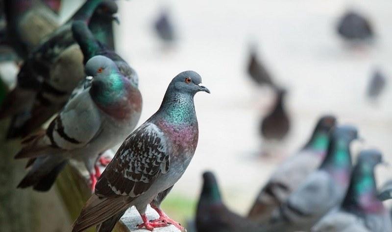 Gołębie wcale nie rodzą się dorosłe - to tylko mit /123/RF PICSEL