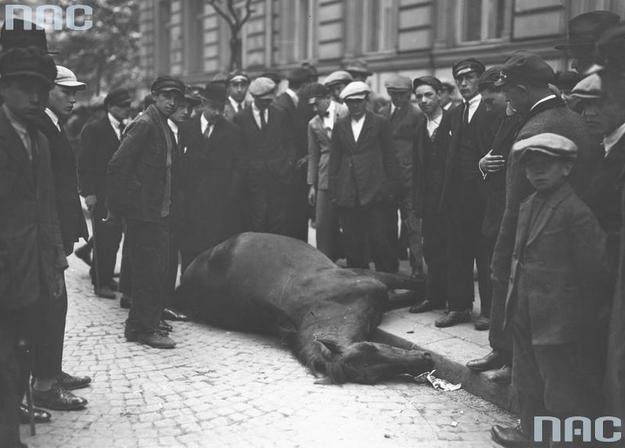 Grupa przechodniów podczas oglądania na ulicy zabitego w trakcie walk konia /Z archiwum Narodowego Archiwum Cyfrowego