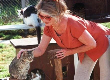 Gwiazda poświęciła się walce o prawa zwierząt /AFP