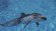 Hamas schwytał delfina podejrzanego o szpiegowanie