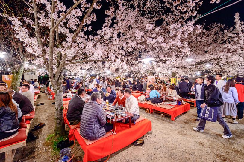 Hanami w Japonii /©123RF/PICSEL
