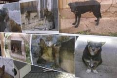 Happening w obronie psów uwiązanych do budy