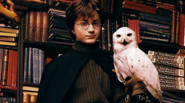 Hinduskie dzieci - podobnie jak Harry Potter - chcą mieć własne sowy /
