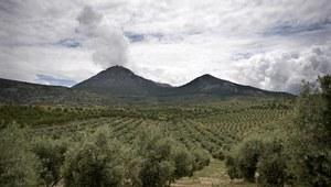 Hiszpania: W gajach oliwnych 47 euro dziennie