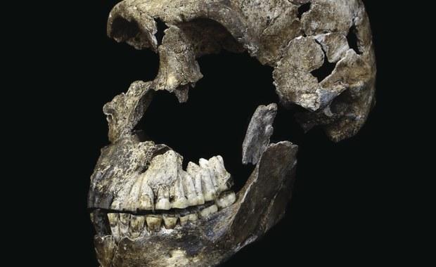 Homo naledi - kolejny krewny, z którym mogliśmy się krzyżować?
