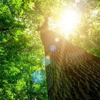 Horoskop drzewny