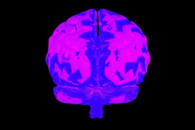 Human Brain Project zakłada stworzenie najdokładniejszej mapy ludzkiego mózgu /123RF/PICSEL
