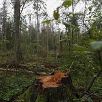 Incydent w Puszczy Białowieskiej. Ekolodzy: Nie było ataku na księdza