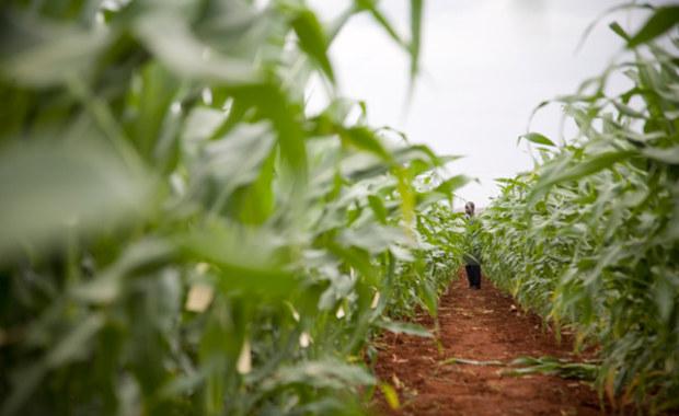 Intensywna uprawa ziemi ogranicza ocieplenie klimatu