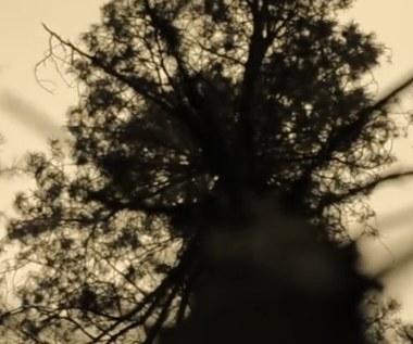 ISLE OF LOVE  - Song of Silence
