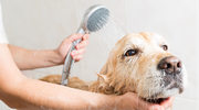 Jak dbać o sierść psa i kota?