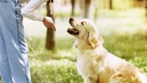 Jak dbać o zwierzęta wiosną?