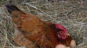 Jak kupować jaja? Co oznaczają kody?