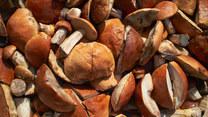Jak najzdrowiej przygotowywać grzyby? Dietetyk odpowiada