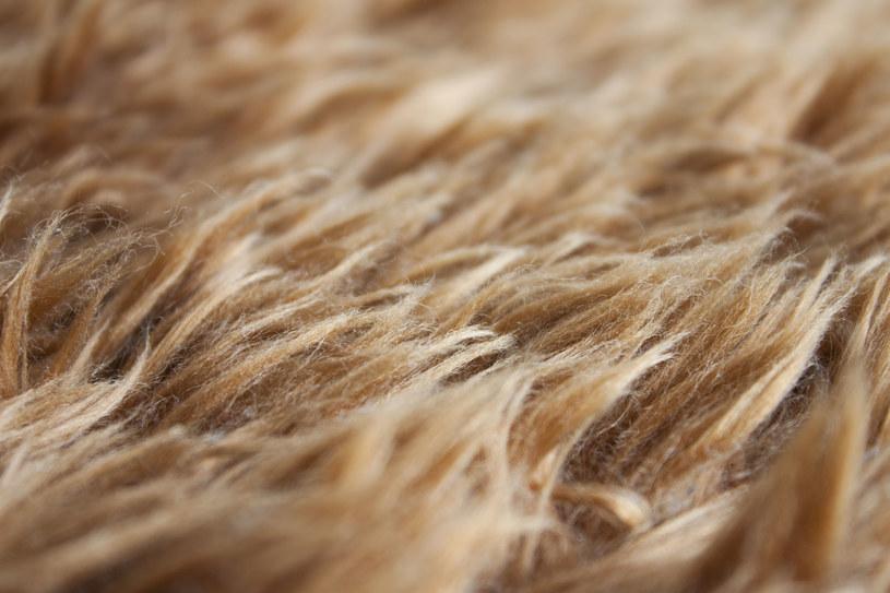 Jak odświeżyć brzydko pachnące futerko? /123RF/PICSEL
