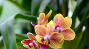 Jak pielęgnować rośliny, żeby pięknie rosły