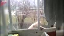 Jak podstępny kot poszedł na skróty