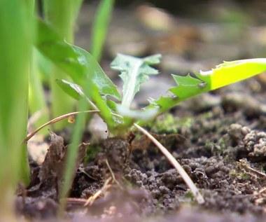 Jak przygotować ogród na przyjście wiosny?