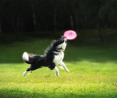 Jak rozpieścić psa na spacerze?