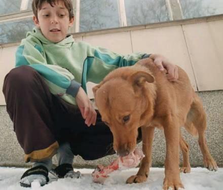 Jak się okazuje pies nie dla wszystkich jest zwierzęciem domowym, przynajmniej nie dla posłów... /AFP