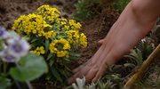 Jak skomponować kwiatową rabatę?