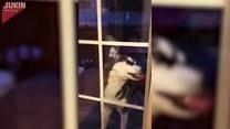 Jak szybko umyć okna? Kup sobie psa