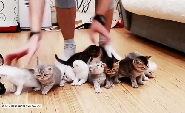 Jak ustawić gromadę kociaków do zdjęcia?
