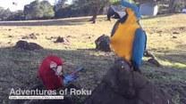 Jak wygląda świat z perspektywy papugi?
