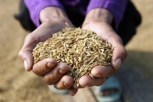 Jak wyżywić populację Ziemi w 2050 roku?