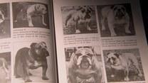 Jak zmieniały się rasy psów?