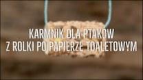 Jak zrobić karmnik dla ptaków z rolki po papierze?