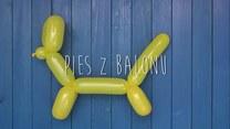 Jak zrobić psa z balonika?
