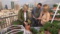 Jak zrobić warzywniak na balkonie?