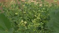 Jak zrobić warzywnik na balkonie?