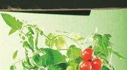 Jakie rośliny możemy uprawiać na balkonie