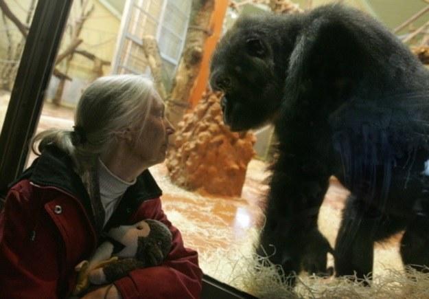 Jane Goodall /AFP