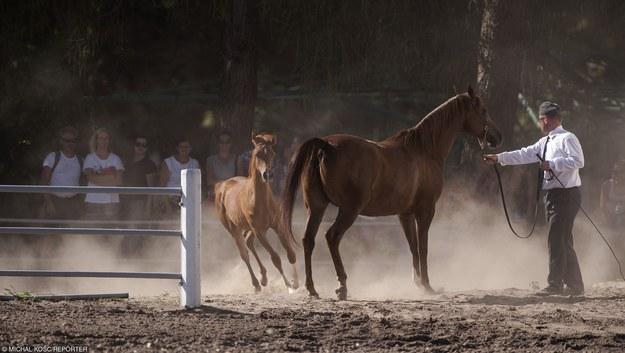 Janów Podlaski jest słynny z hodowli koni/fot. M. Kość /Reporter