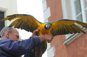 Jeden z warszawskich kataryniarzy ze swoją papugą /Andrzej Rybczyński  /PAP