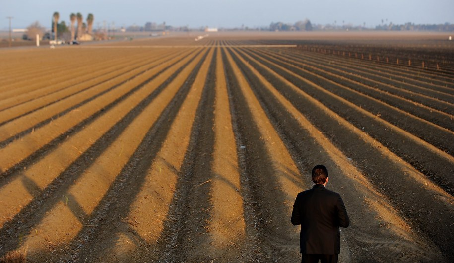 Jedno z pól w Kalifornii /Wally Skalij / POOL /PAP/EPA