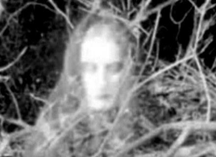 Jedno ze zdjęć transkomunikacyjnych uzyskanych w trakcie nagrywania białego szumu w telewizorze /MWMedia