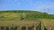 Jedziemy do Burgundii