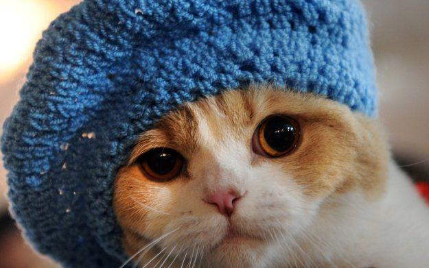 Jestem taki słodki, że mój właściciel na pewno kupi mi wszystkie dodatki do aplikacji Games for Cats /AFP