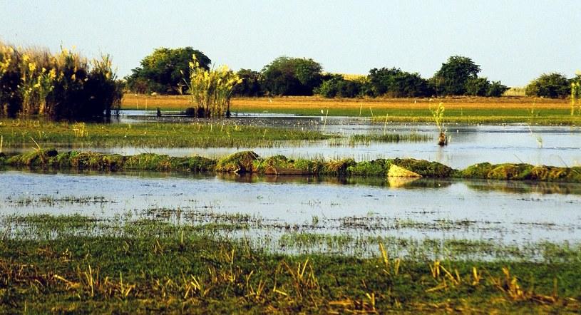 Jezioro Bangweulu w Zambii jest płytkie i otaczają je rozległe tereny podmokłe. To, według znawców tematu, idealne warunki do życia dla wielkiego gada. /materiały prasowe