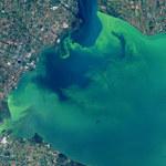 Jezioro Erie zmieniło kolor na zielony