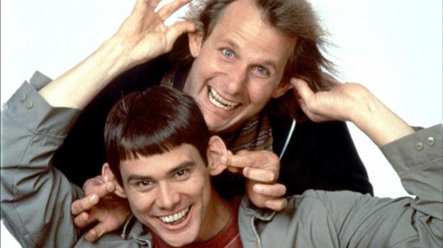 """Jim Carrey i Jeff Daniels powtórzą swoje role z """"Głupiego i głupszego"""" /materiały prasowe"""