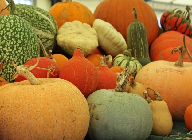 Kabaczki, dynie, patisony i cukinie - bogactwo jesiennych smaków /123RF/PICSEL