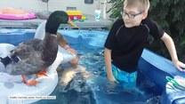 Kaczka bawi się z dziećmi w basenie
